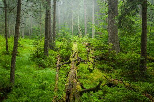Wilder Wald: Hollbachgespreng